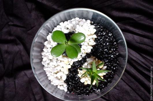 Флорариум `Инь и Ян` - идеальное украшение для дома или офиса