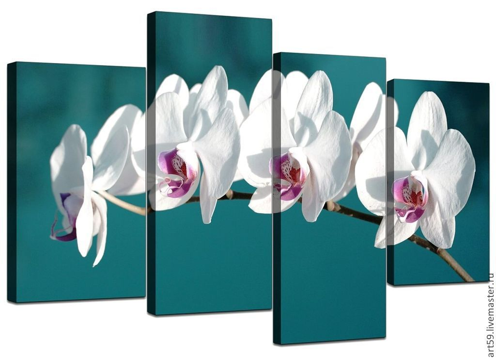 White orchids on turquoise background, Pictures, St. Petersburg,  Фото №1