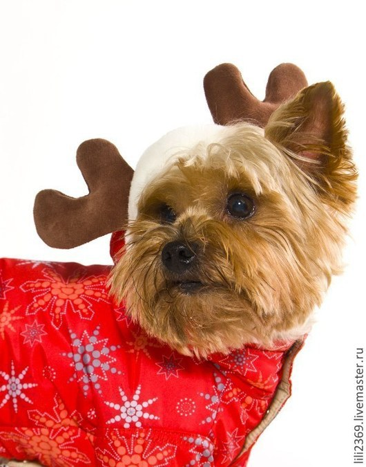 """Одежда для собак, ручной работы. Ярмарка Мастеров - ручная работа. Купить Комбинезон """"Северный ветер"""". Handmade. Комбинезон для собак, йорк"""