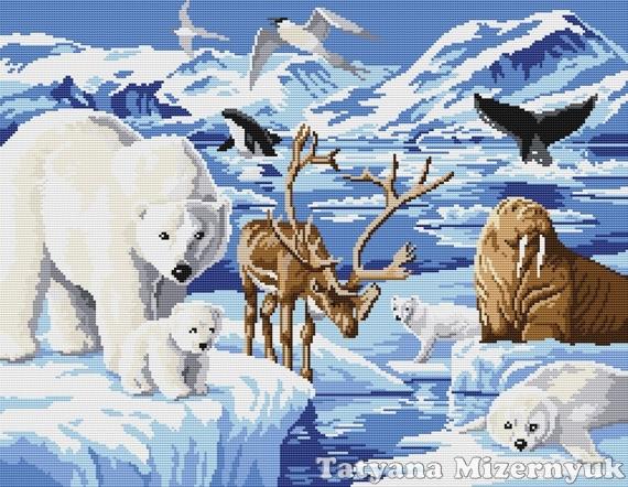 Схема арктика животные