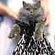 Одежда для кошек, ручной работы. Ярмарка Мастеров - ручная работа. Купить Кошкины платья для торжественных случаев. Handmade. Одежда для кошек