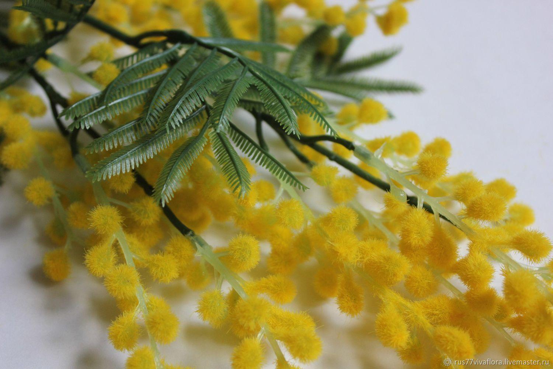 Веточка мимозы фото цветка