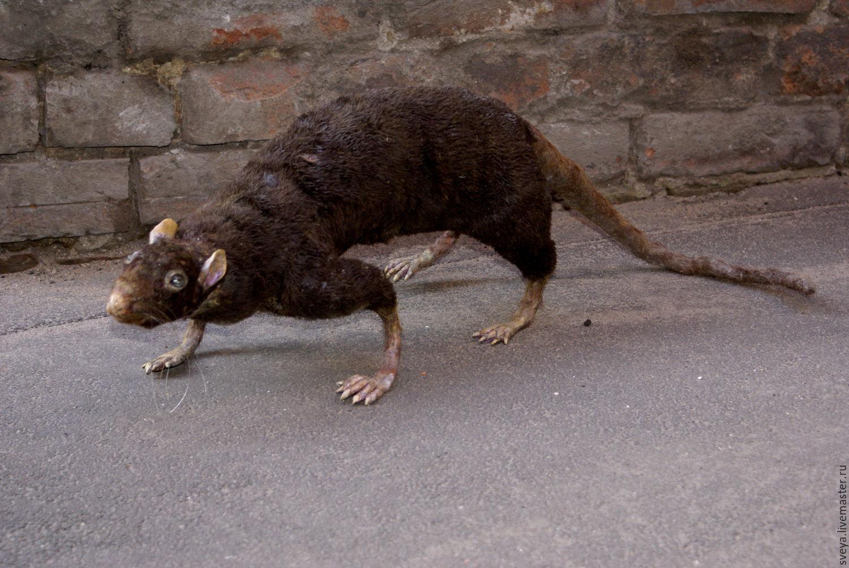 крысы уличные фото