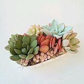 Цветы и флористика ручной работы. Ярмарка Мастеров - ручная работа Суккуленты в овальной чаше. Handmade.