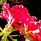 Колье, бусы ручной работы. Яркий цветок. Наталья Галкина (bijou2you). Ярмарка Мастеров. Красная шпинель, красная шпинель