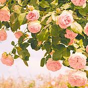 Картины и панно handmade. Livemaster - original item Roses photography, pink flowers art, botanical wall art, bedroom decor. Handmade.