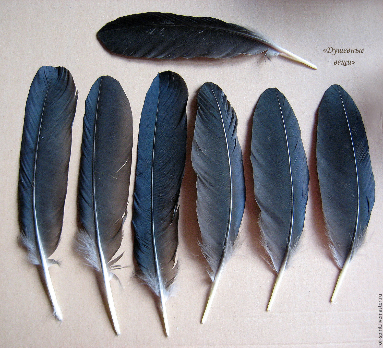 Перья черного ворона (уценка – купить на Ярмарке Мастеров – CFA7ZRU | Перья, Балашиха