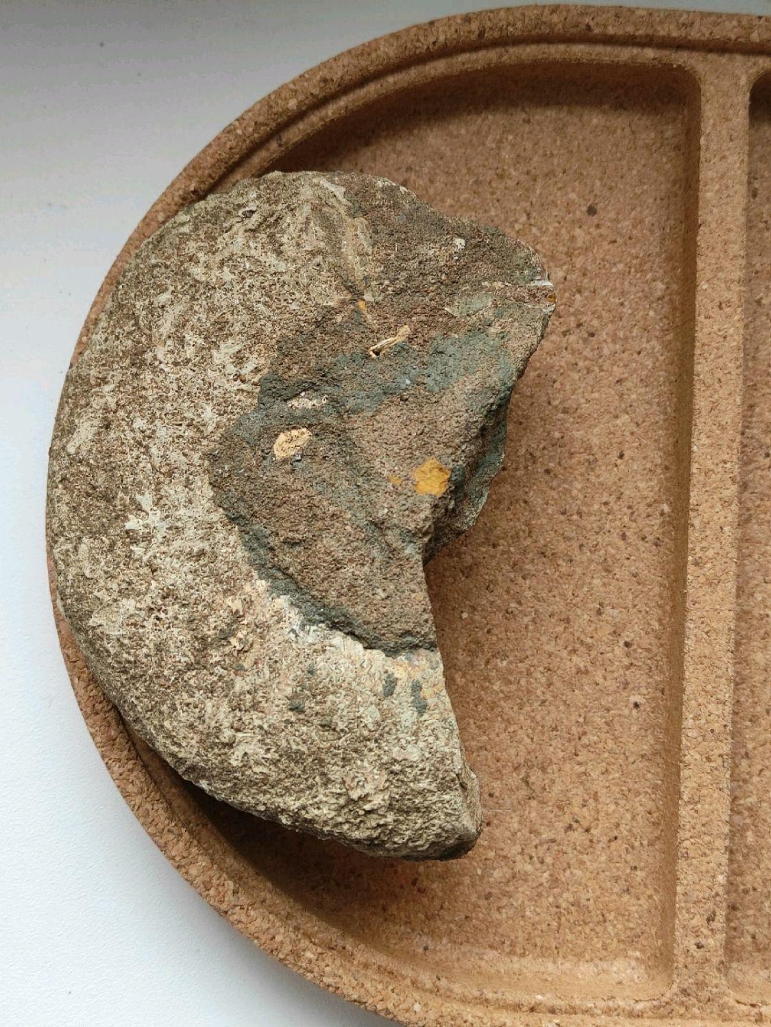 Аммонит в породе. Минерал для коллекционирования, Камни, Санкт-Петербург,  Фото №1