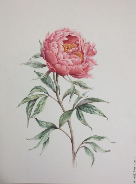 Картины цветов ручной работы. Ярмарка Мастеров - ручная работа. Купить Пион. Handmade. Комбинированный, цветы, пион, ботаническая иллюстрация