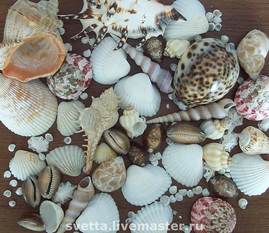 Ракушки Черного моря - Анапа