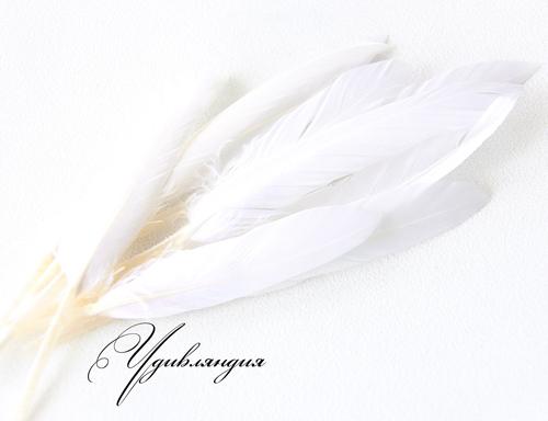 Другие виды рукоделия ручной работы. Ярмарка Мастеров - ручная работа. Купить Перо гуся натуральное, окрашенное белое №93.. Handmade.