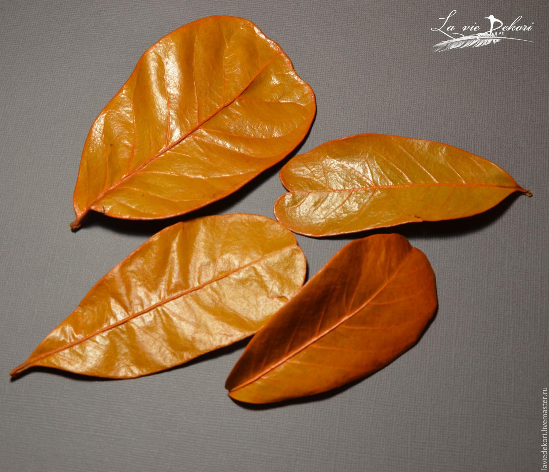 Leaves 'Mandioca' , 3 PCs, Natural materials, Moscow,  Фото №1
