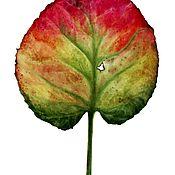 Картины и панно ручной работы. Ярмарка Мастеров - ручная работа Ботаническая живопись Акварель Лист Бадана. Handmade.