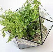 Цветы и флористика handmade. Livemaster - original item The Floriana. Geometric Floriana Icosahedron with fern. Handmade.