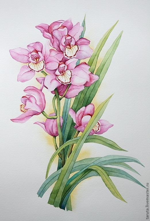 Рисунок `Орхидея` акварель