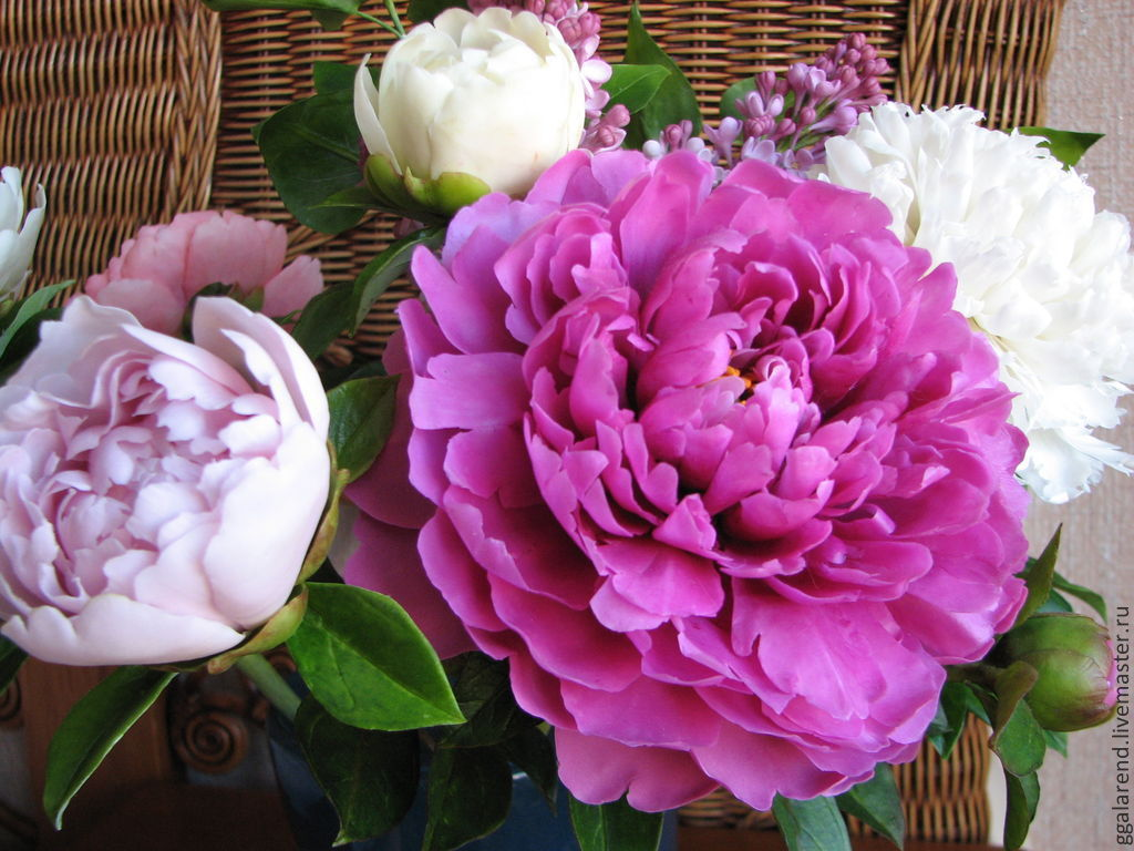 Купить цветок фуксия
