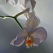 """Цветы и флористика ручной работы. Ярмарка Мастеров - ручная работа композиция """"белые орхидеи"""". Handmade."""
