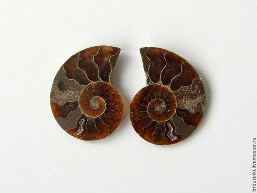 №1. -в наличии №2. -в наличии Аммонит. Симбирцитовый. Природный, натуральный. Древнейшая окаменелость. Размер 28х23 мм. Толщина 4 мм. Цвет очень насыщенный, плотный. Цена 380р. за один аммонит.