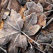 Картины и панно ручной работы. Ярмарка Мастеров - ручная работа фотокартина - осенние листья. Handmade.