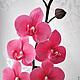 Интерьерные композиции ручной работы. Заказать Орхидея фаленопсис из полимерной глины. Цветы ручной работы Виниченко Ольги. Ярмарка Мастеров.