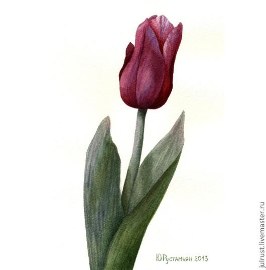 Открытки для женщин, ручной работы. Ярмарка Мастеров - ручная работа. Купить Открытка авторская Тюльпан, цветы акварель бордовый. Handmade.
