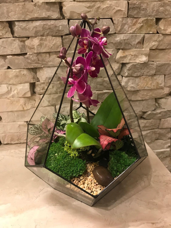 Как сделать флорариум для орхидей своими руками 88