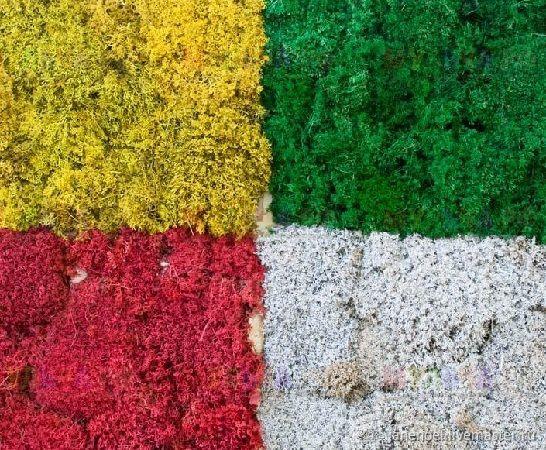 Эко мох цветной Эквадор, Материалы для флористики, Москва, Фото №1
