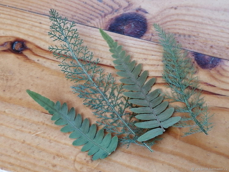 Сухоцвет. Листья сушеные – заказать на Ярмарке Мастеров – ML1WURU | Сухоцветы, Иркутск