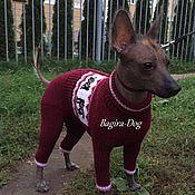 """Для домашних животных, ручной работы. Ярмарка Мастеров - ручная работа Комбинезон для Ксоло """" Собаки богов """" бордовый. Handmade."""