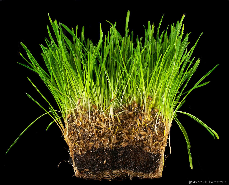 """Фотография для печати """" Зеленая трава"""". на черном фоне, Фотографии, Москва,  Фото №1"""