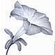 Картины цветов ручной работы. Картина Петуния, рисунок карандашом серый белый графика. Юлия Рустамьян. Интернет-магазин Ярмарка Мастеров.