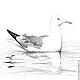 Животные ручной работы. Ярмарка Мастеров - ручная работа. Купить Картина Чайка, серый белый черный птица рисунок графика карандаш. Handmade.
