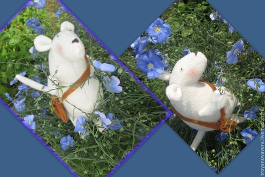Эжен любит лето и садовые цыеты. С его шубкой хорошо сочетаются нежные соцветия голубого льна.
