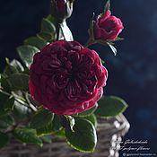 Подарки к праздникам handmade. Livemaster - original item Rose English( Marsala,Burgundy ) from polymer clay.. Handmade.