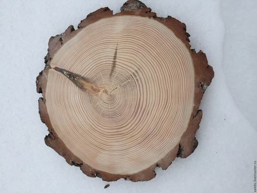 Шлифованный спил сосны 23 см. в диаметре с корой