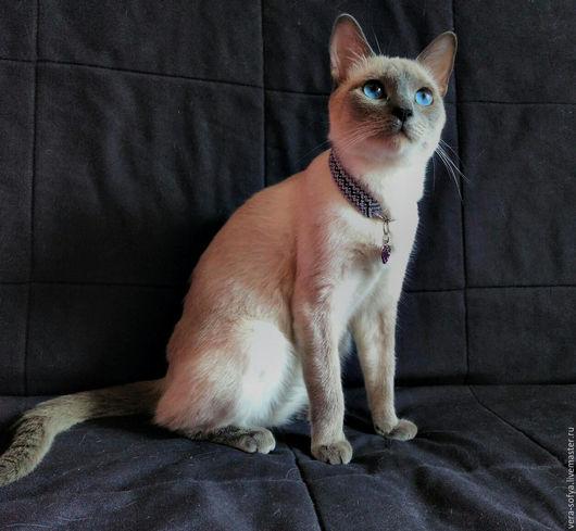 Ошейник для кошки из ниток мулине. Для примера - 700 р.