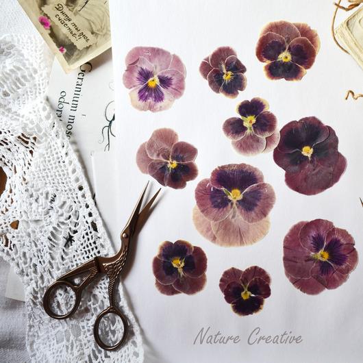 Открытки и скрапбукинг ручной работы. Ярмарка Мастеров - ручная работа. Купить «Виола сливовая» засушенные цветы для творчества. Handmade.