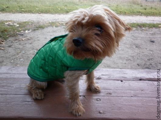 Жилет осенне-весенний. Работа для примера. Сделаю на заказ для любых пород собак, не завмсимо от особенностей телосложения.