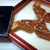 Дизайн и реклама ручной работы. Ярмарка Мастеров - ручная работа Самая большая бабочка в мире - Павлиноглазка Атлас. Handmade.