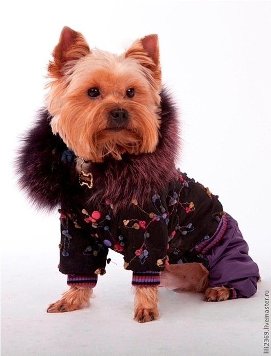 Одежда для собак, ручной работы. Ярмарка Мастеров - ручная работа. Купить Одежда для собак зимний комбинезон Фейерверк. Handmade. мех