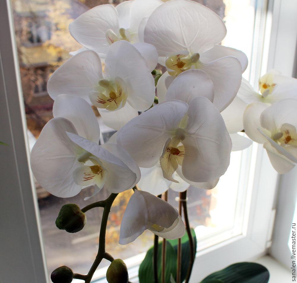 Орхидея крупные цветы купить заказать цветы с доставкой в минеральных водах