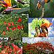 Колибри и красный ибис, делоникс королевский (`дерево-пожар`) и карнавал — яркие штрихи к портрету островов Тринидад и Тобаго.