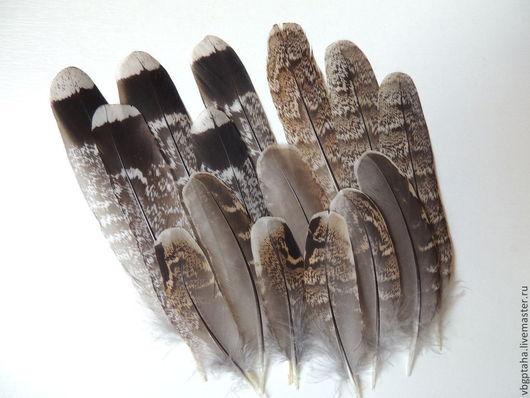 Другие виды рукоделия ручной работы. Ярмарка Мастеров - ручная работа. Купить Перья рябчика. Handmade. Коричневый, Перья для декора