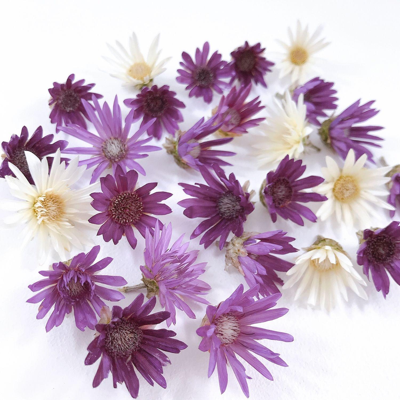 Цветы сухоцветы фото названия описание