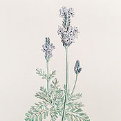 Картины и панно handmade. Livemaster - original item Botanical watercolor, Lavender. Handmade.