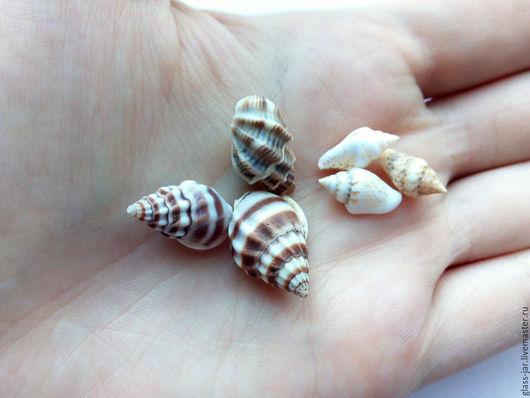 Другие виды рукоделия ручной работы. Ярмарка Мастеров - ручная работа. Купить Ракушки морские маленькие 2 размера. Handmade.