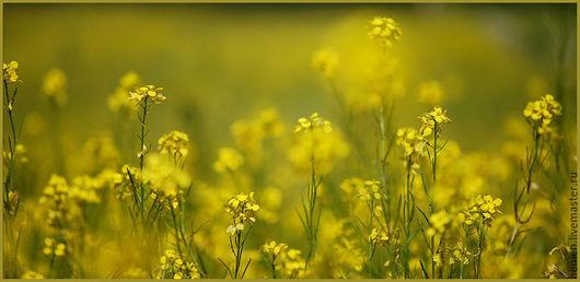 """Фотокартины ручной работы. Ярмарка Мастеров - ручная работа. Купить Фотокартина """"Солнечные зайчики"""". Handmade. Желтый, лето, луг, цветы"""