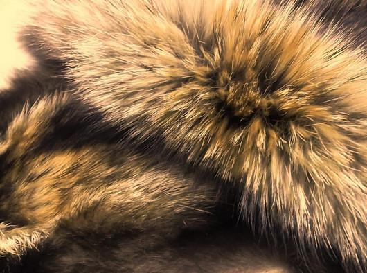 Шитье ручной работы. Ярмарка Мастеров - ручная работа. Купить Енотовидная собака натуральный цвет. Handmade. Коричневый, енот