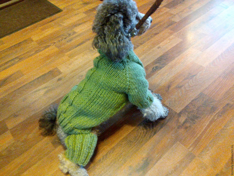 Купить вязаная одежда для собак и кошек - одежда для собак ...