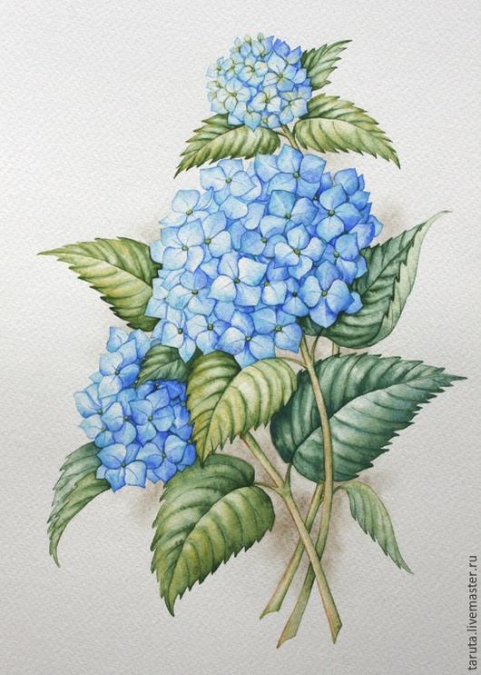 Рисунок `Голубая гортензия`  (акварель)